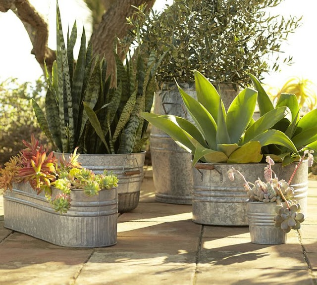 Galvanized metal tubs, buckets, pails as planters