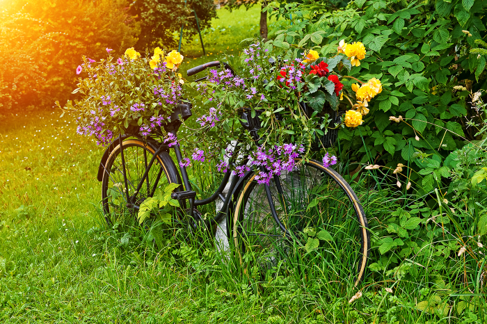 antique-bicycle-planted-the-plant-place