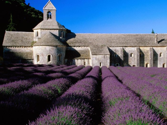 Lavender Fields Provence France Big