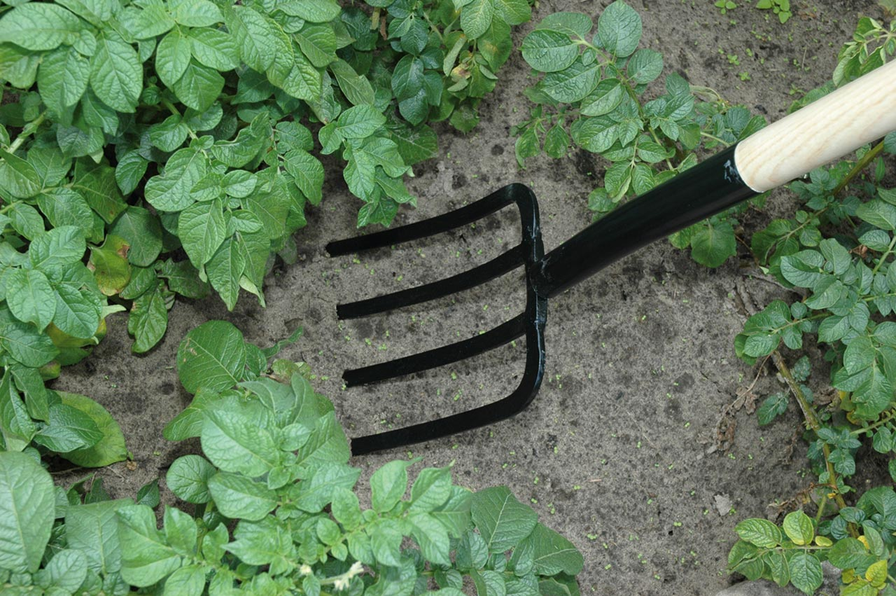 5 tools every gardener should have my own plot for Gardening tools used in planting crossword clue