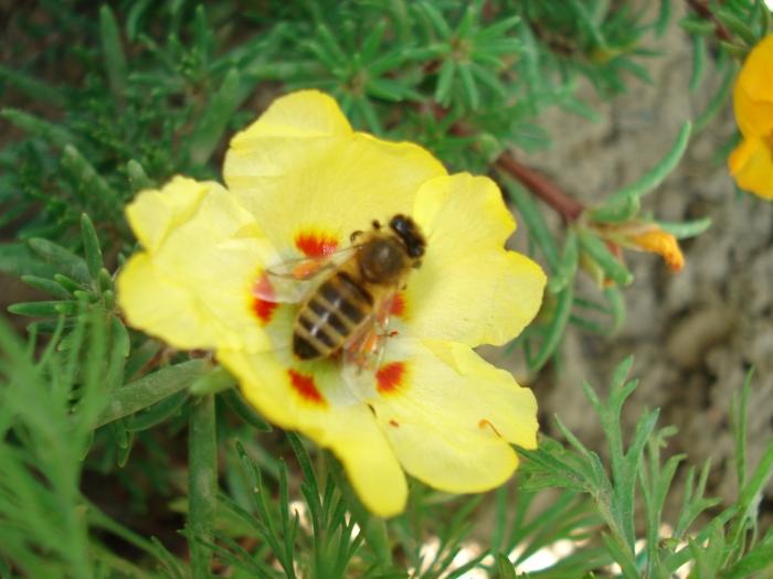 Bee-friendly garden